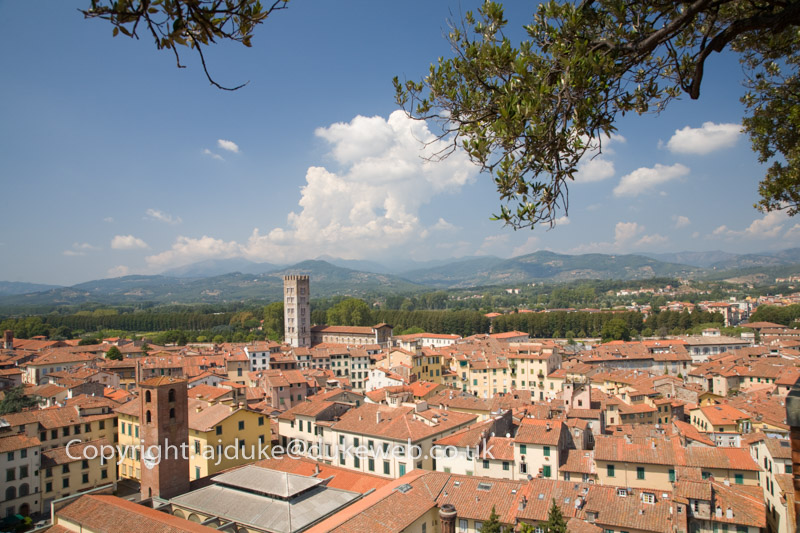View from Torre Guinigi across Lucca, Tuscany, italy